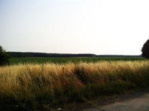 Kreuzfeld hinter Blumenberg