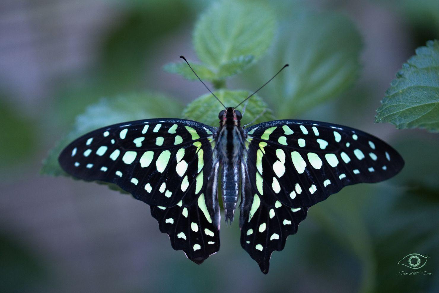 Symmetrie der Natur