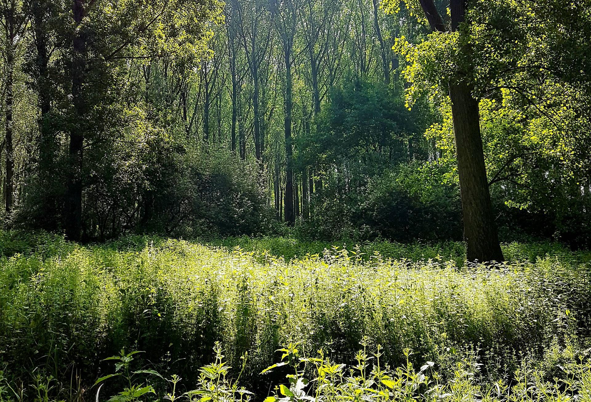 Wald Köln