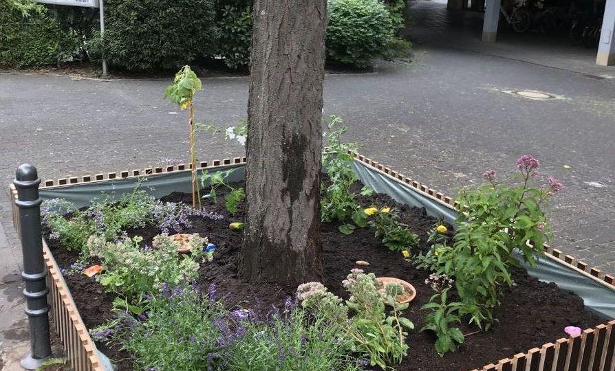 Baumpatenschaft - bepflanzt